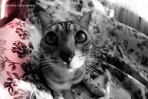 По-домашнему. Кот Зигфрид