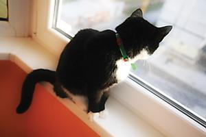 Кошка Дуня