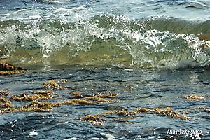 Волна