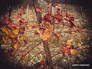 Виноградная осень