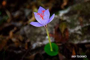 Цветы на горе Папай