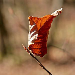 Зимний лист